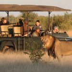 Zimbabwe's Wildlife And Magnificent Landscapes At A Glance