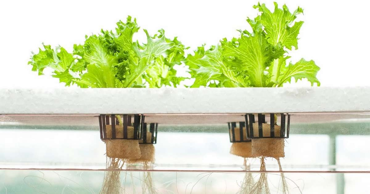 The Future is Hydroponics