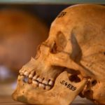 Germany returns skulls of Namibian genocide victims